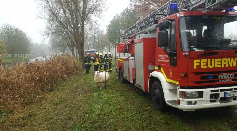 H2 Schaf in Wasser